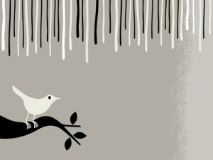 squawk